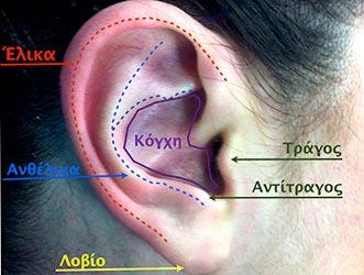 Η δομή του αυτιού (κόγχη, έλικα, ανθέλικα, τράγος, αντιτραγος, λοβίο)